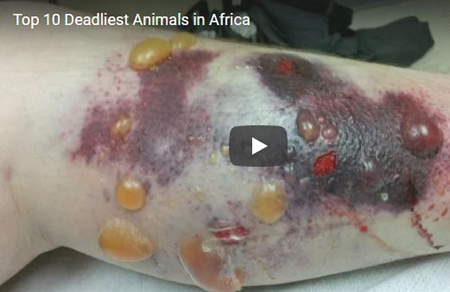Top 10 Most Dangerous Animals: Africa