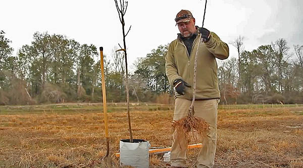 VIDEO: Plant Fruit Trees For Deer