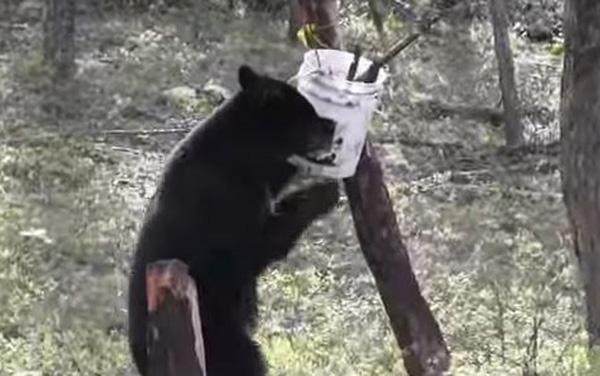 Shore Lunch = Bear Hunt