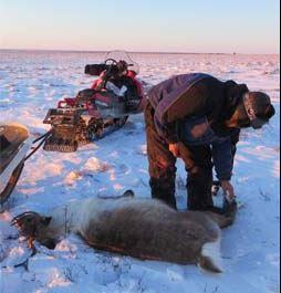 HSUS Attack On Alaska Hunting A Sham
