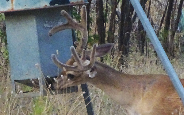 RH BLOG: Buck Pictures