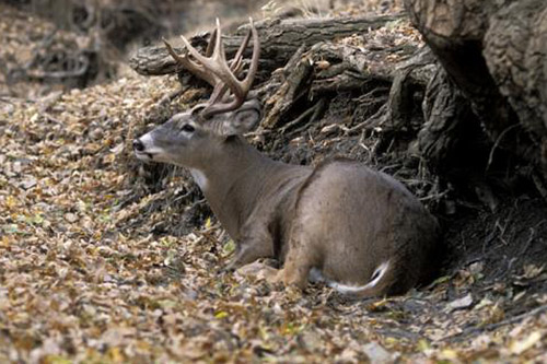 HOW TO: Find Whitetail Hot Spots