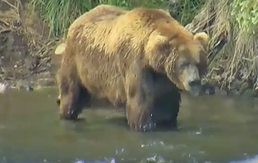 ROY KEEFER: Alaskan Brown Bear Bowhunt, Pt 2