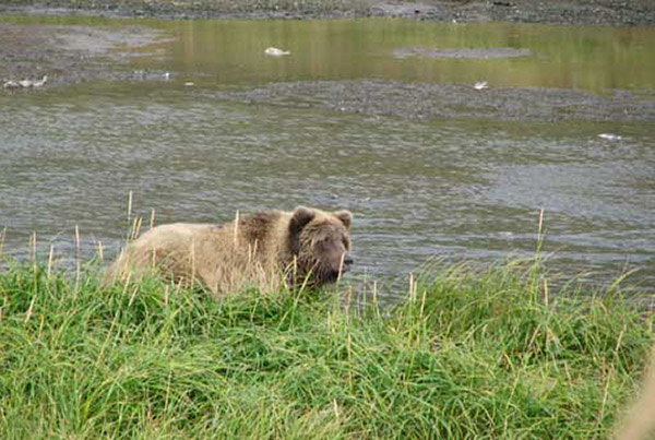 ROY KEEFER: Alaskan Brown Bear Bowhunt, Pt 1