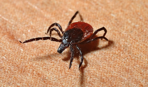 Lyme Disease Information