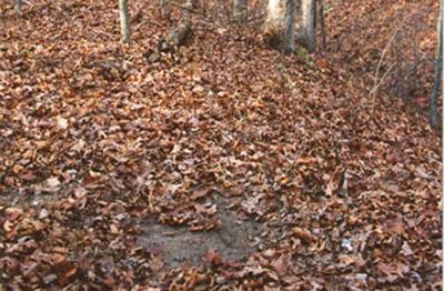 Lisa's Deer Scouting Tips