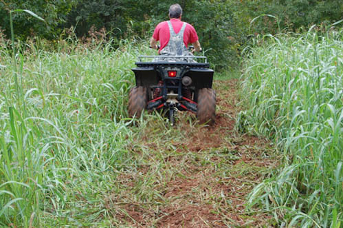 How To Make Food Plots For Cheap
