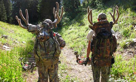 Team Work For Bowhunting Mule Deer In The High Country