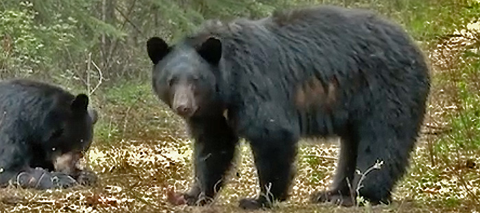Jason Allen: First Bear Bowhunt