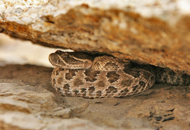 Poisonous Snakes: Can you Spot Them?