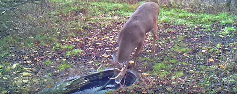 How To Make A Deer Waterhole