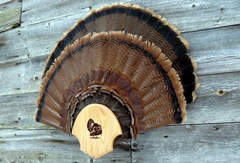 Mount Your Wild Turkey Fan