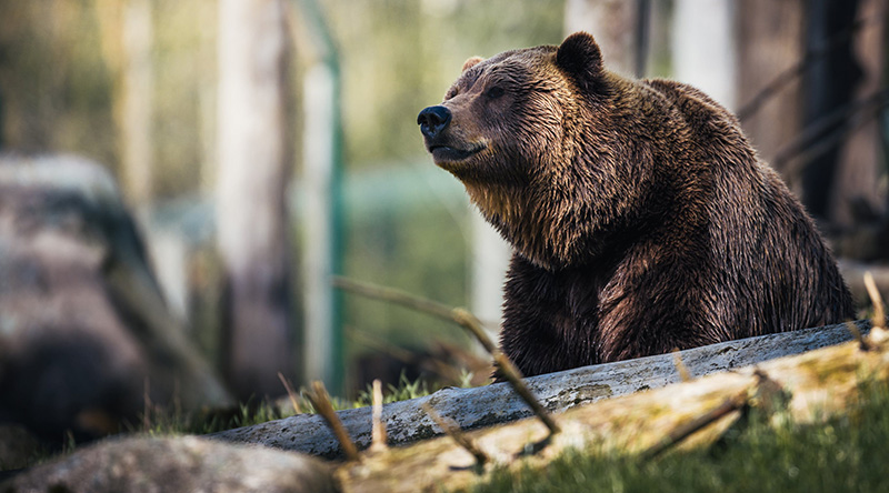 Tips You Need For Hunting In The Bear Woods