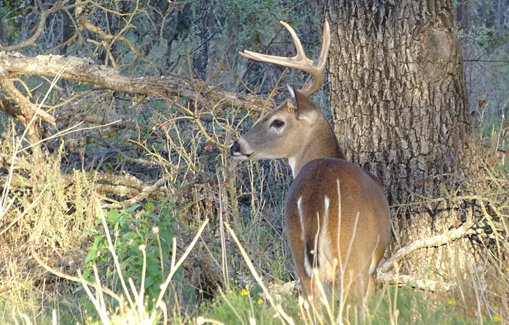 2019 Tin Shed Buck Bowhunt