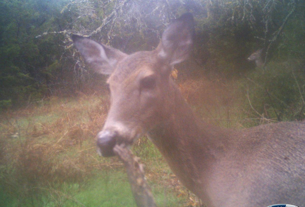 deer smelling limb
