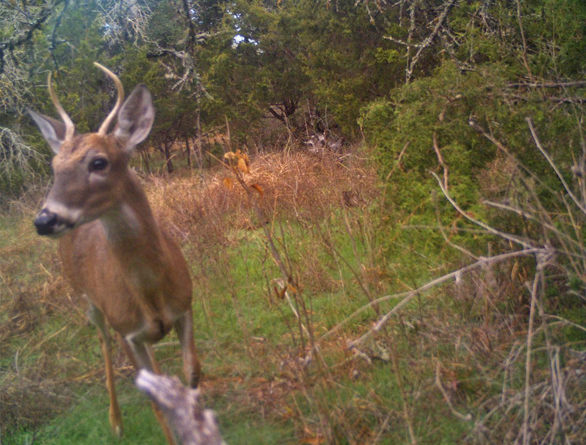 deer scouting