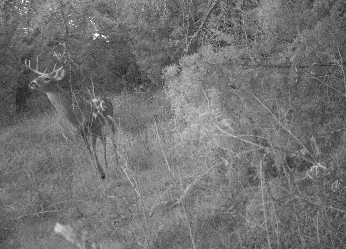 Deer Scouting Pictures Robert Hoague I 00200