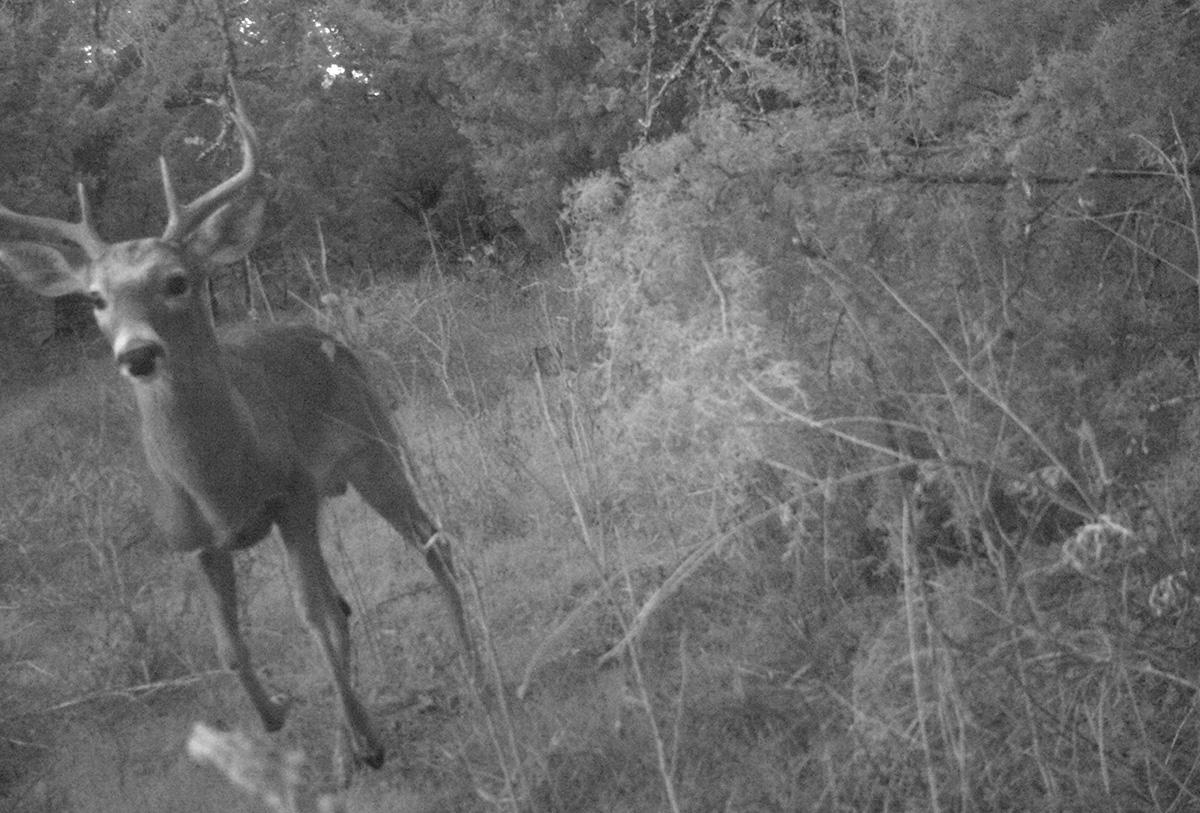 Deer Scouting Pictures Robert Hoague I 00202