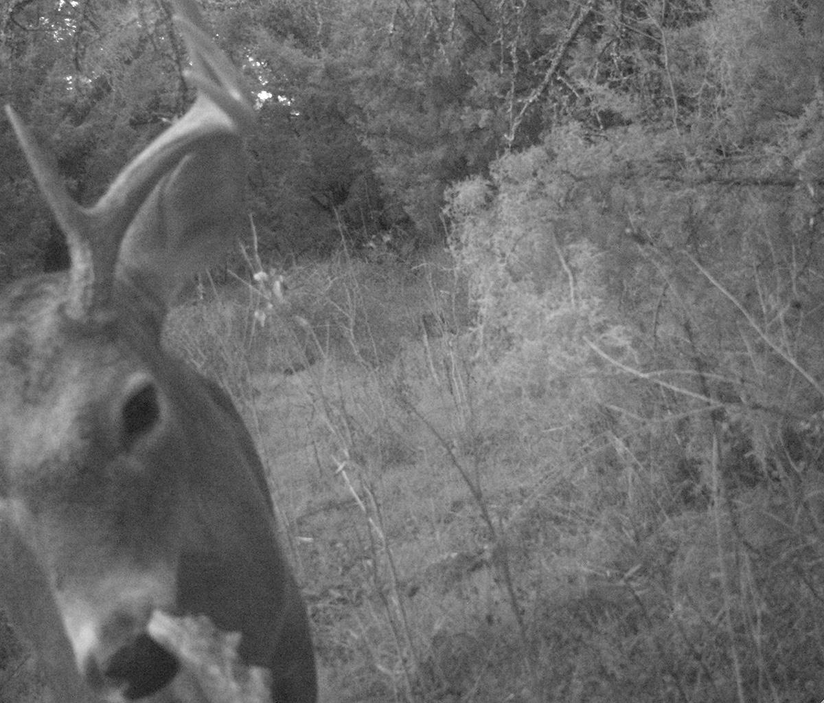 Deer Scouting Pictures Robert Hoague I 00204