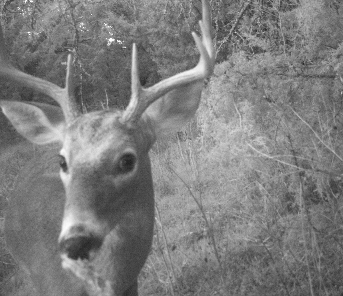 Deer Scouting Pictures Robert Hoague I 00207