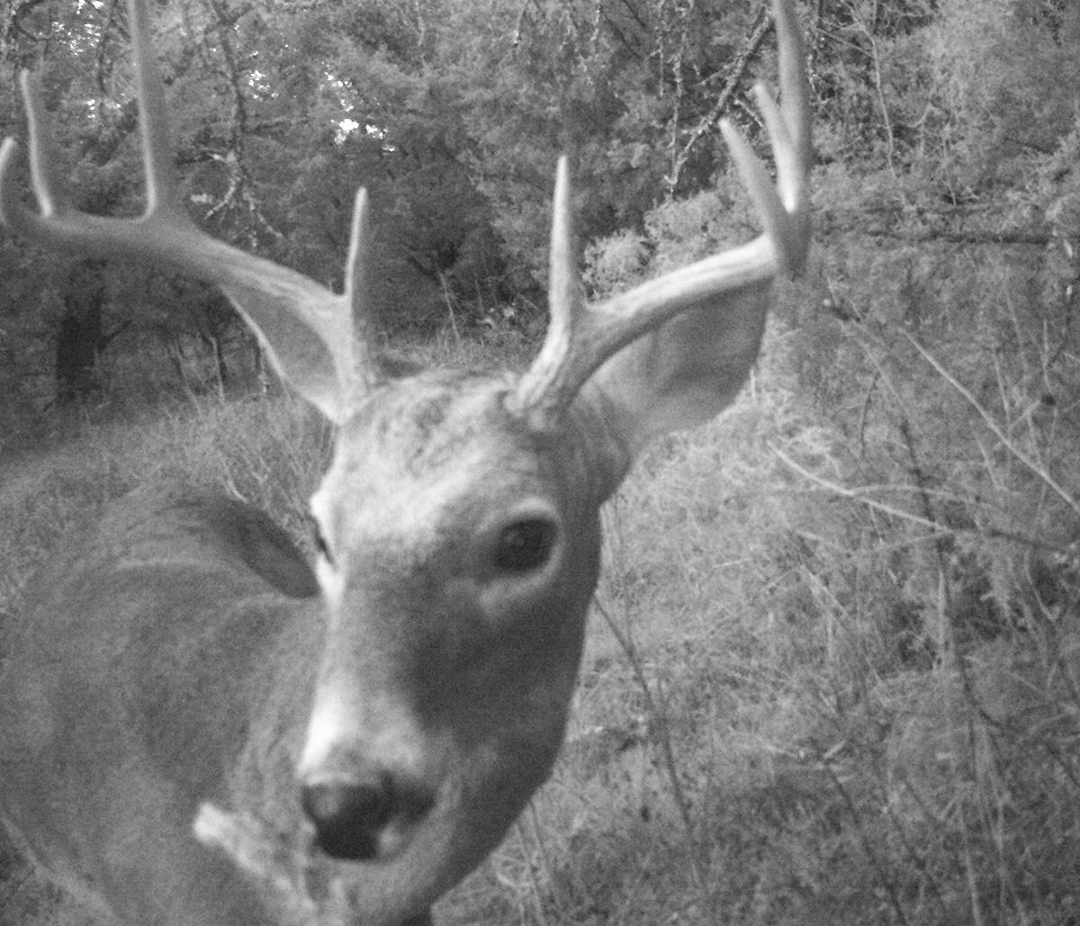Deer Scouting Pictures Robert Hoague I 00208