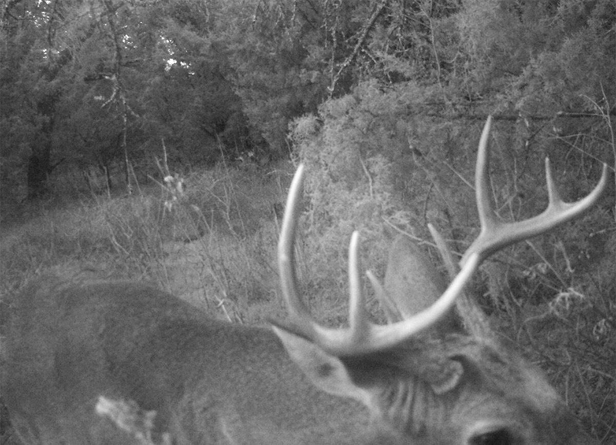 Deer Scouting Pictures Robert Hoague I 00209