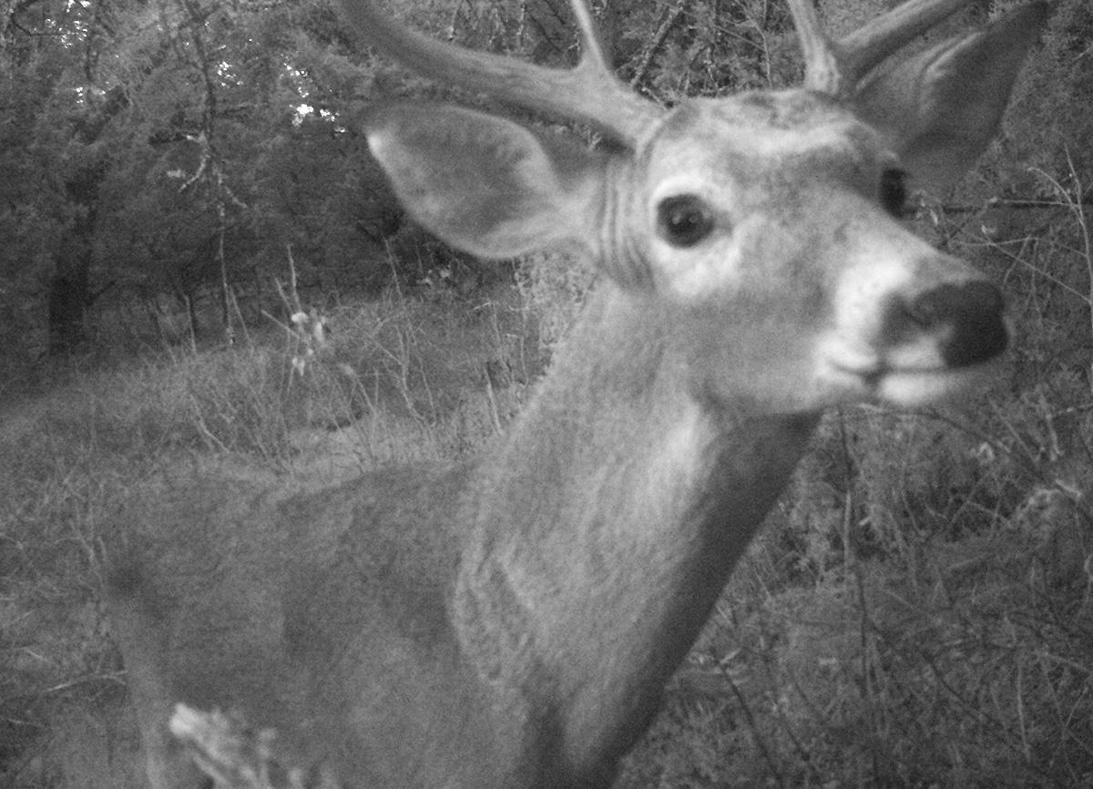 Deer Scouting Pictures Robert Hoague I 00210