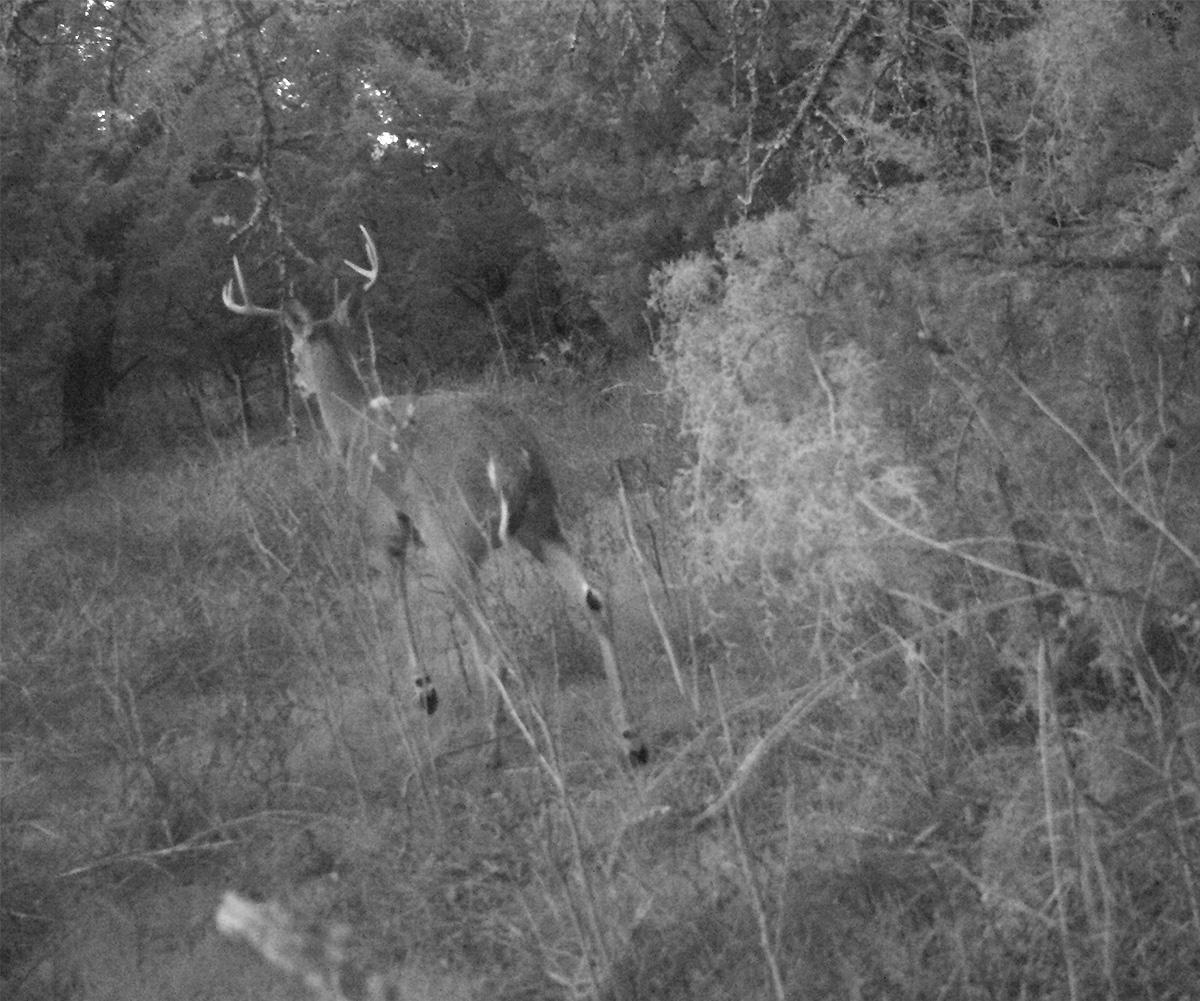 Deer Scouting Pictures Robert Hoague I 00212