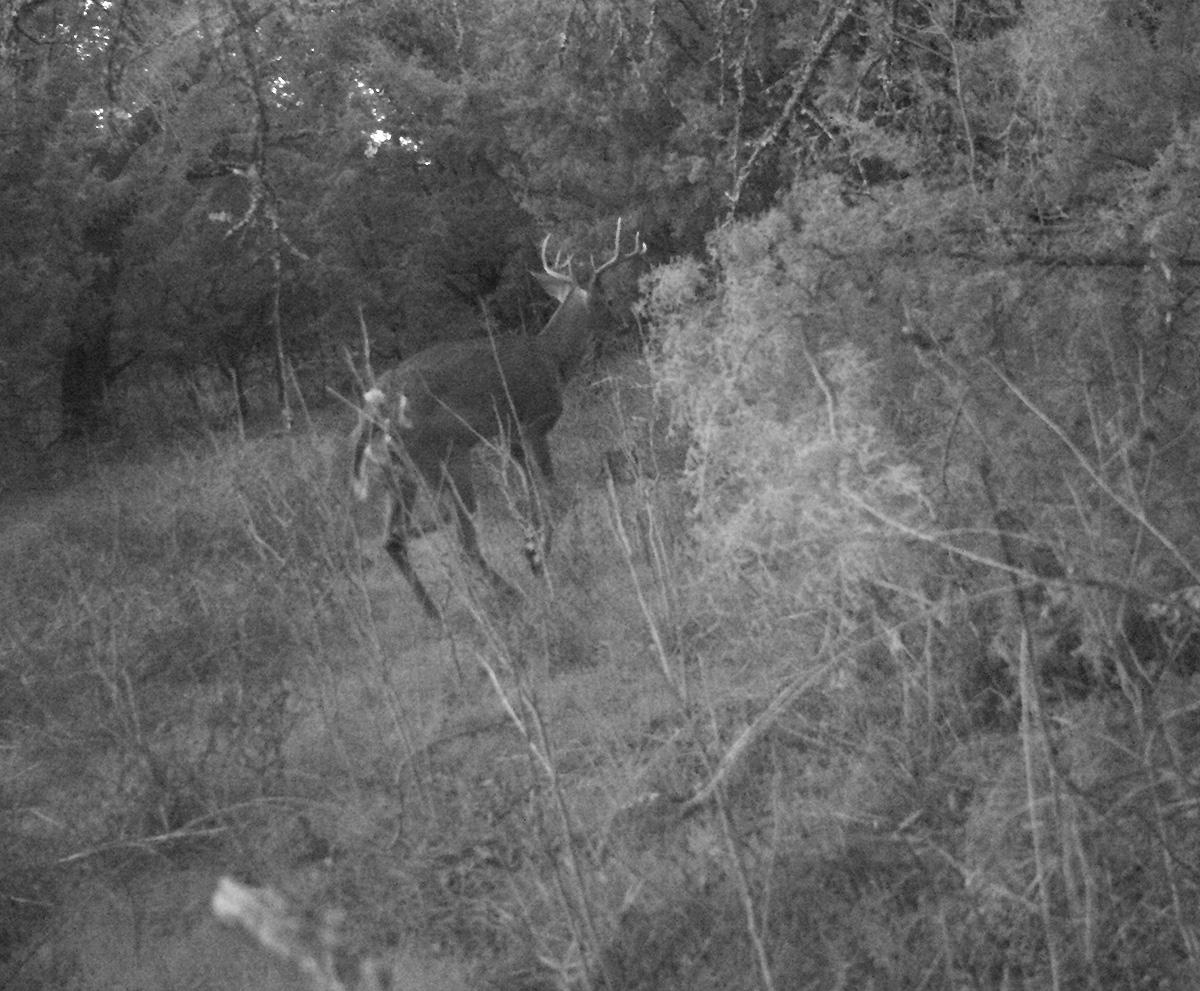 Deer Scouting Pictures Robert Hoague I 00213