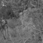 Deer Scouting: Big Buck Of The Future