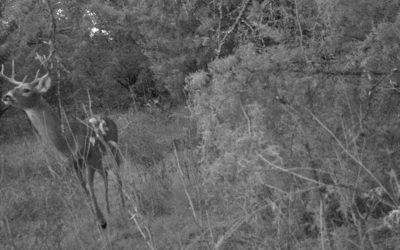 Deer Scouting: Big Buck Of The Future