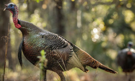 Avoid These 5 Turkey Hunting Mistakes