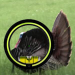 Proper Arrow Placement For Bowhunting Wild Turkey
