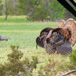 2021 Wild Turkey Season – Opening Morning